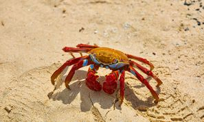 "PINCHY SPIDER Adopts ""Big Game Hunting"" to Distribute GandCrab (Malware and Vulnerabilities)"
