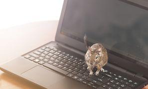 RevengeRAT Distributed via Bit.ly, BlogSpot, and Pastebin C2 Infrastructure (Malware and Vulnerabilities)