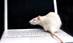 New WSH RAT Malware Targets Bank Customers with Keyloggers (Malware and Vulnerabilities)
