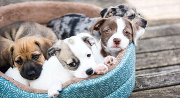 Fraud alert: Internet puppy purchase scams rising