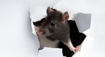 Cybercriminals put new Parasite HTTP RAT is up for sale on the dark web - Cyber security news