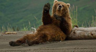 Russian Cyber Operations: Fancy Bear - Cyber security news