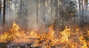 Wildfire Ransomware Operators Made $80,000 in a Month - Cyber security news