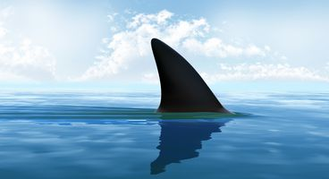 Multiple Vulnerabilities Fixed in Wireshark 3.0.4 Release - Cyber security news