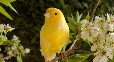 User Entity Behavioral Analysis: Canary in a Coal Mine - Cyber security news