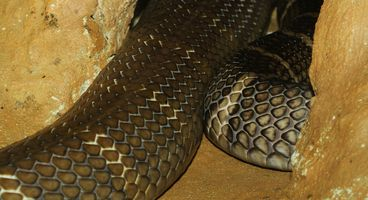 Pivoting off the Indicators of Hidden Cobra  - Cyber security news