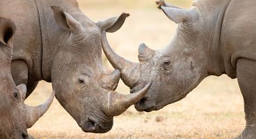 Interpol Suggests There Really are Dark Web Rhino Horn Traffickers