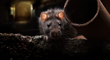 An Insight into the 'Dark RAT' - Cyber security news