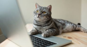 Charming Kittens APT Group Targets Security Researchers From the US and the Middle East - Cyber security news