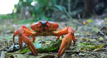 GandCrab attackers exploit recently patched Confluence vulnerability - Cyber security news - Malware Attack News