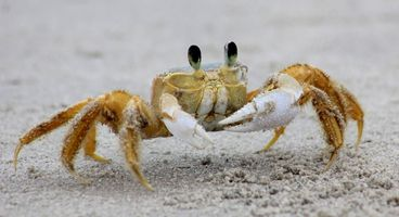 Game Over for GandCrab: New free decryption tool allows victims to unlock all versions of this ransomware - Cyber security news