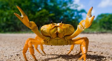GandCrab Ransomware Returns with New Waves of Spam Campaigns - Cyber security news