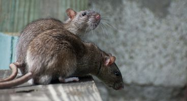 The Story of Manuel's Java RAT - Cyber security news
