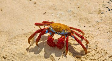 "PINCHY SPIDER Adopts ""Big Game Hunting"" to Distribute GandCrab - Cyber security news"