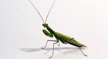 Roaming Mantis, Part IV, Comes With Mobile config for Apple phishing - Cyber security news
