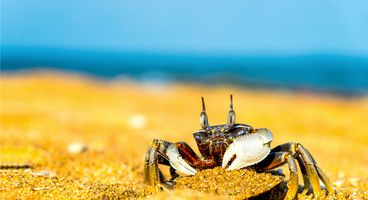 GandCrab Ransomware Affiliates Continue to Push Decryptable Versions - Cyber security news
