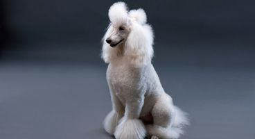 New Zombie 'POODLE' Attack Bred From TLS Flaw - Cyber security news