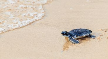 Sea Turtle Keeps on Swimming - Cyber security news