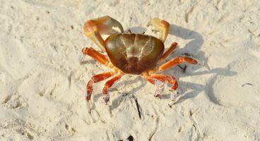 GandCrab Developers Behind Destructive REvil Ransomware - Cyber security news