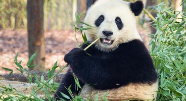 Turbine Panda, China's Spies & Passenger Jets - Cyber security news