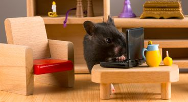 Malicious developer creates wormable, fileless variant of njRAT - Cyber security news