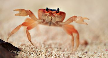 Fileless GandCrab As Seen by SandBlast Agent - Cyber security news