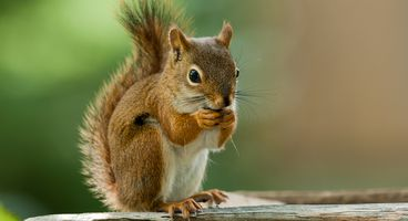 Squirrel Exploit Leaves Microsoft Teams Vulnerable to Privilege Escalation - Cyber security news