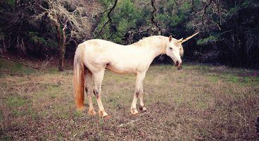 Auto Immune - A Simple Metaphor Has Helped Darktrace Achieve Unicorn Status