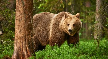 Grizzly Attacks on Secure Messaging