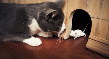 CIOs engage in a cat-and-mouse struggle to secure company communications - Cyber security news