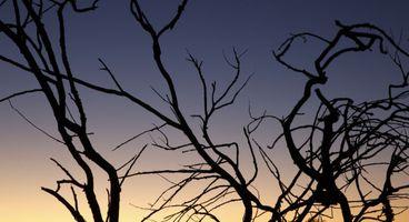 As predicted, more branch prediction processor attacks are discovered
