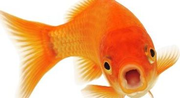Phishing Site Spotted Hosted on .Fish Domain - Cyber security news