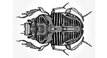 Scarab ransomware: new variant changes tactics