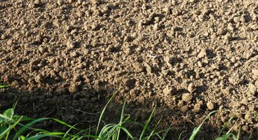 Scientists find soil bacteria require two-layer security, just like digital world