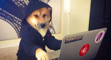 DitM Dog In The Middle – New Hacking Technique to Eavesdropping