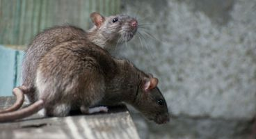 Cisco smells a RAT in Breaking Security's Remcos PC wrangler - Cyber security news