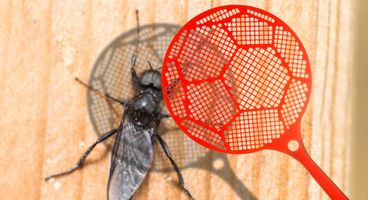 Oracle whips out the swatter, squishes 254 security bugs in its gear - Cyber security news