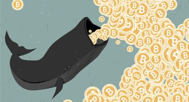 Harpoon Cannon Method: How Scammers Catch Bitcoin Whales