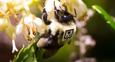 Why These Bumblebees Are Wearing Itty-Bitty QR Codes - Information Security News