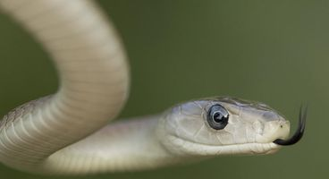 Destructive, disk-encrypting Mamba ransomware springs back to life
