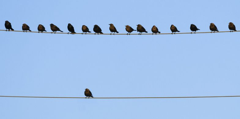 Bird,Cable,Wire,Flock Of Birds,Horizontal,No People,Photography,Telephone,