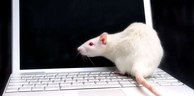 computer,rat,animals,black,cute,dark,domestic,fear,funny,fur,fuzzy,head,macro,mouse,pets,ratty,rodents,white