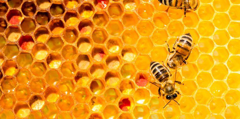 Hidden Bee cryptocurrency miner delivered via Underminer exploit kit